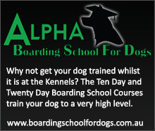 Boarding School for Dogs